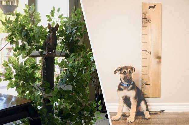 26 Custom Gifts Pet Owners Will Love *Almost* As Much As Their Pets