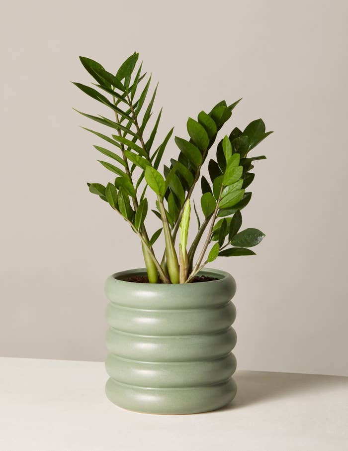 Yes, you read that right: This deal includes the planter and live plant. Get it from Amazon for $50+ (available in small and medium and in four colors). Check out The Sill's full collection of planters and live plants on Amazon and consult our list of the best places to buy houseplants online.