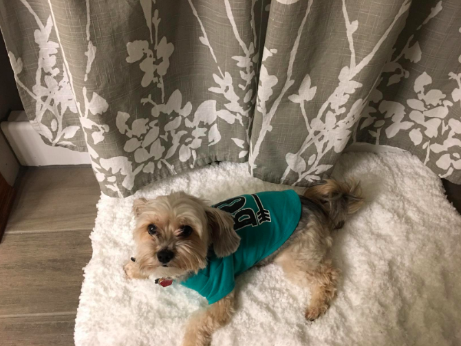 a customer review photo of a dog on the white bath mat