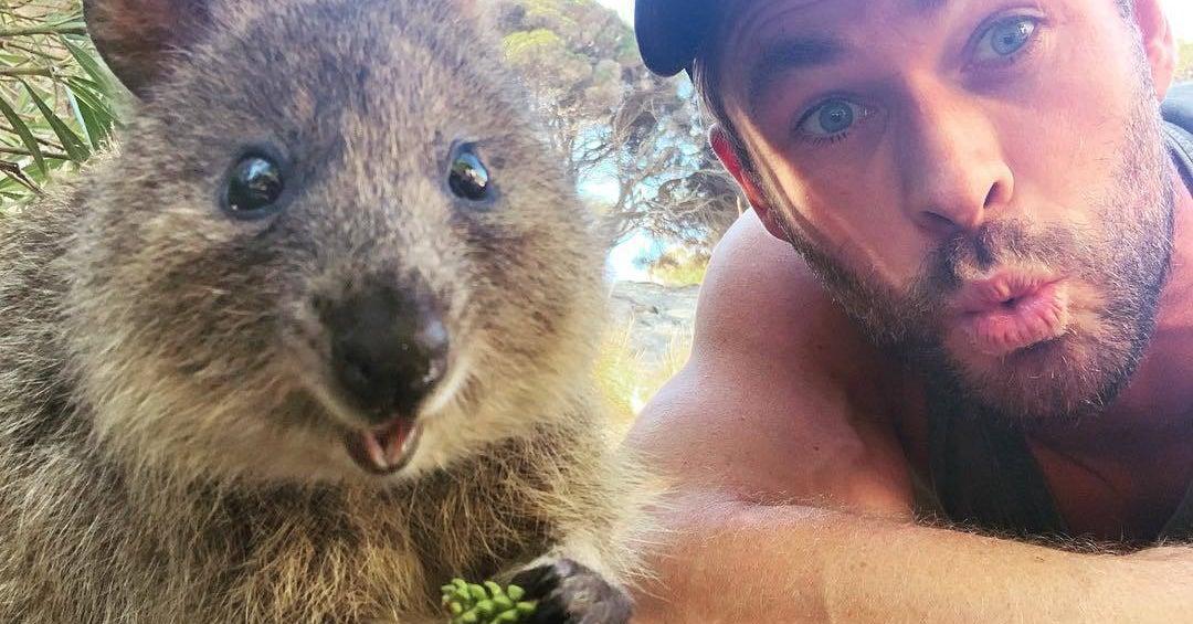 Chris Hemsworth Just Became BFFs With An Australian Quokka