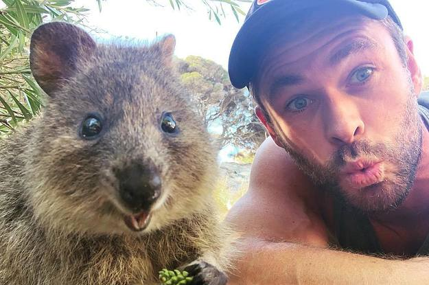 Chris Hemsworth Just Became BFFs With An Australian Quokka And My Heart Is Full