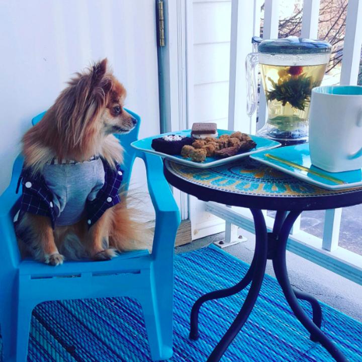 dog poses next to flowering tea