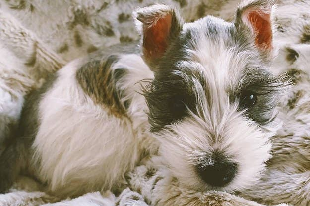 Are These Real Dog Breeds Or Fake Ones I Just Made Up?