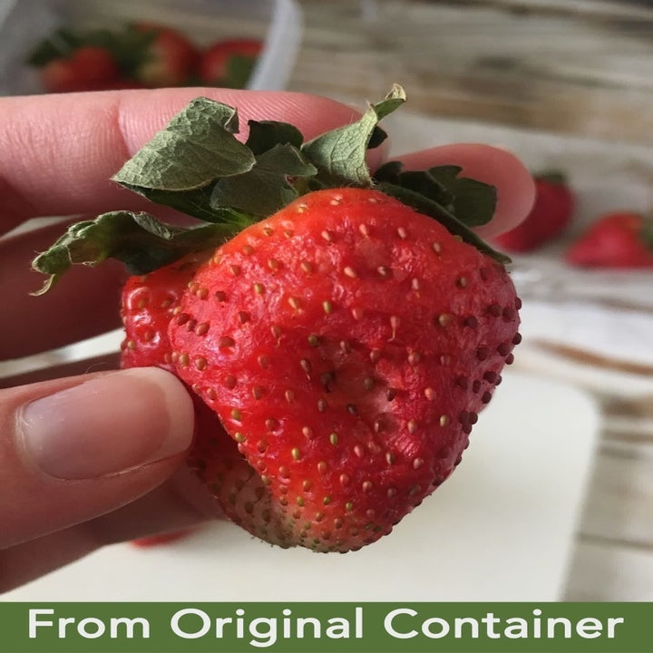 wrinkled strawberry with dried out leaves because it was stored in the original container from the store