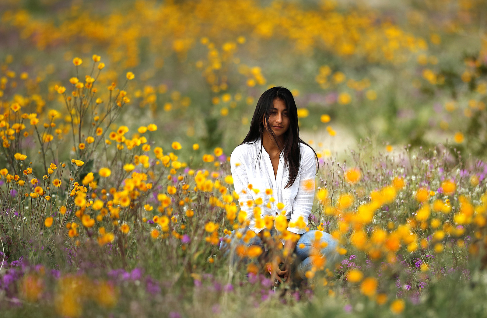 A woman sits in a field of wildflowers in bloom near Borrego Springs, California, March 6.