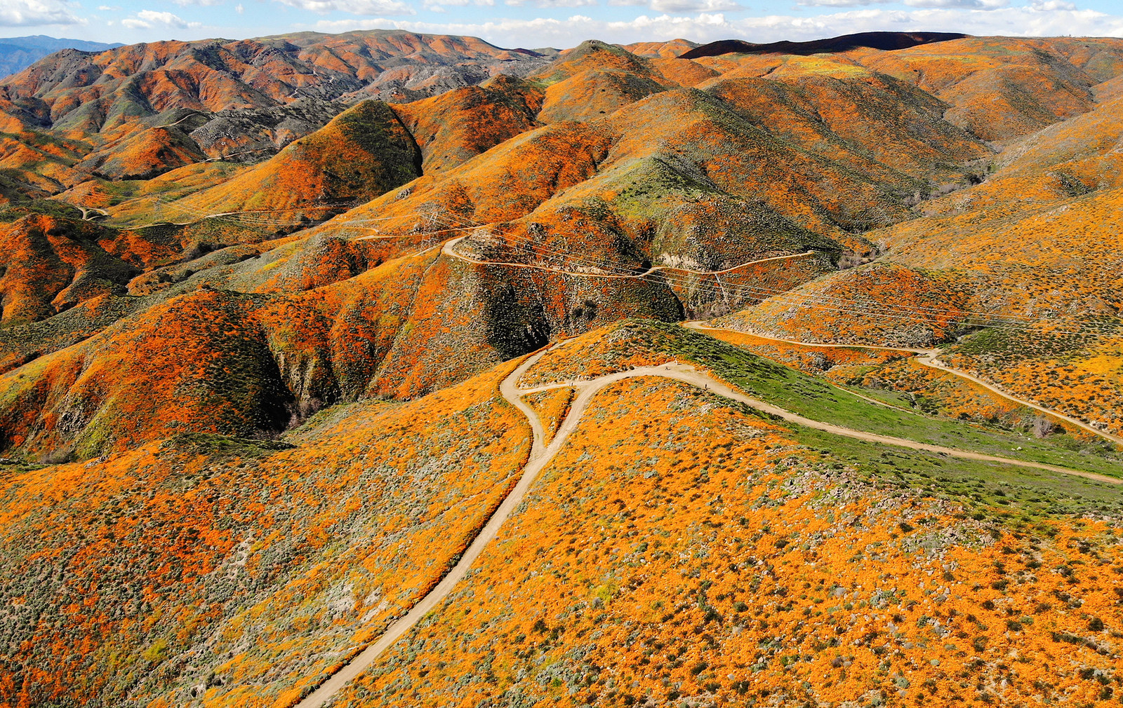 "18 Breathtaking Pictures From California's Stunning ""Super Bloom"""