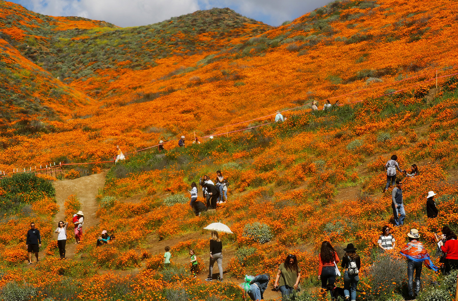 People visit wild poppies blanketing the hills of Walker Canyon, March 12.