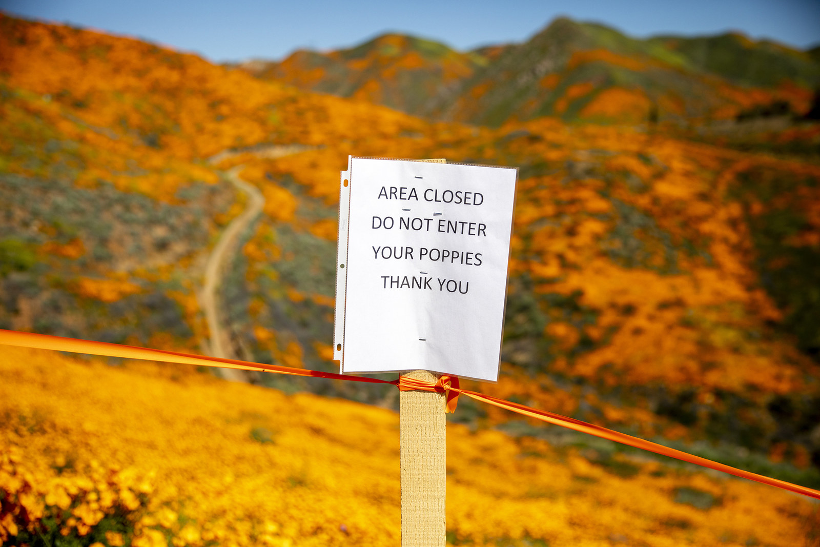 A sign protecting flowers is posted on a field near Lake Elsinore, March 16.