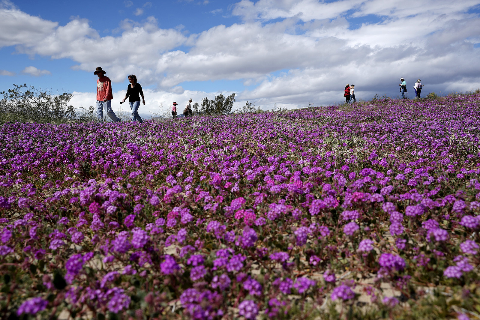 People walk among wildflowers in bloom, March 6.