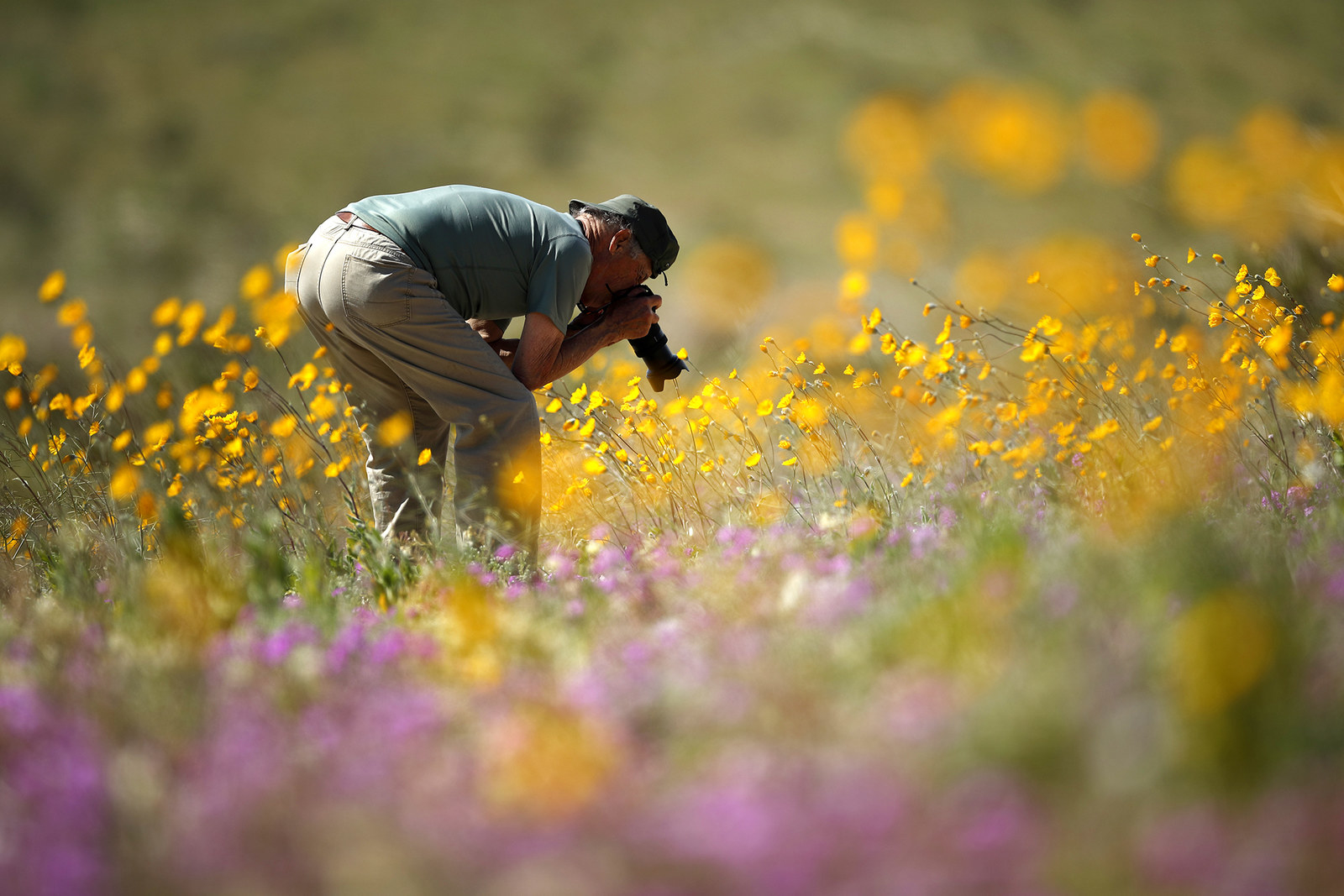 A man takes pictures of wildflowers in bloom, March 6.