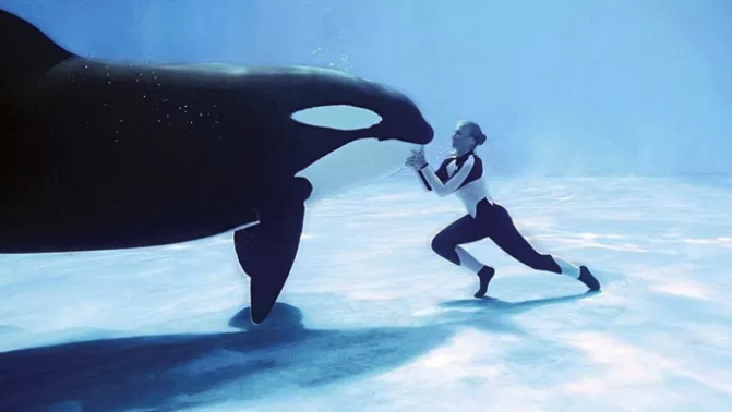 This disturbing documentary follows the story of Tilikum, an orca at SeaWorld who killed three people, and exposes the shocking truth and controversy behind keeping animals in captivity.—mireyagonzalez