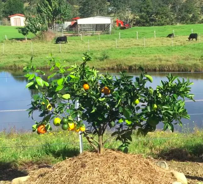 Sie erzeugen verschiedene Arten derselben Familie. An einem Zitrusbaum können dann Zitronen, Limonen und Orangen wachsen; an einem Steinobstbaum wiederum Pfirsiche, Pflaumen und Aprikosen.