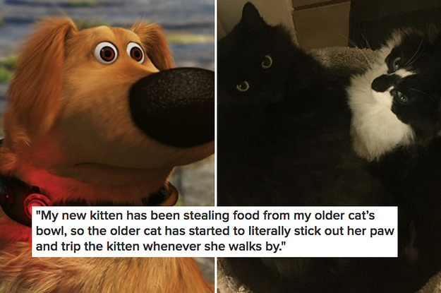 15 Hilarious Stories About Pet Siblings Who Are Currently In The Midst Of Their Own Drama