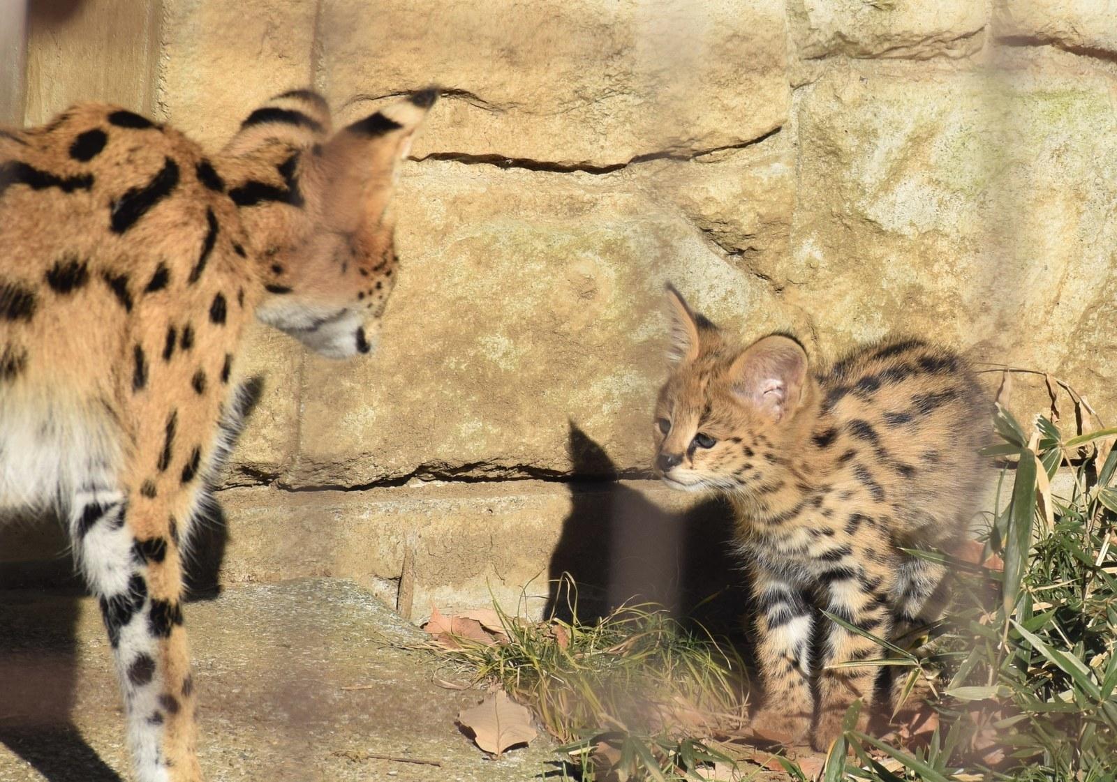 多摩動物公園|無料入園日|日野市 | セイトInfo|八 …