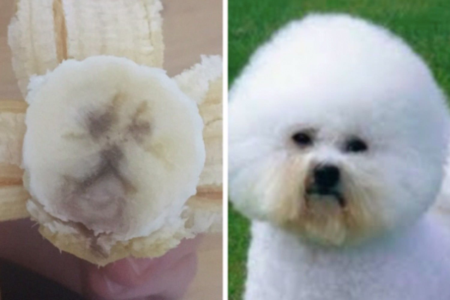 15 Dog Posts From This Week That Are Chock Full Of Heckiliciousness, Boopability, And Scritchocity