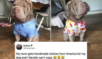 15 Dog Posts From This Week That'll Boop Your Snoot, Guaranteed