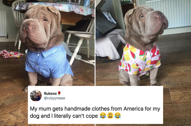 15 Dog Posts From This Week That'll ...