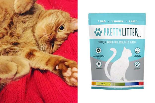 This Kitty Litter Actually Helped Save My Cat's Life