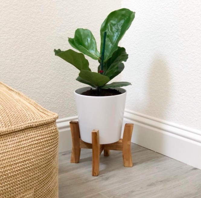 A customer review photo of the plant on a stand.