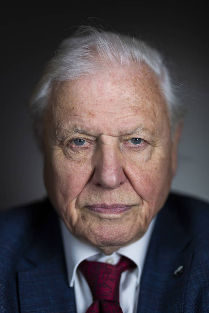 """Sir David Attenborough Urges Young People To Look Up From Their Screens At The """"Great Treasure"""" Of The Natural World"""