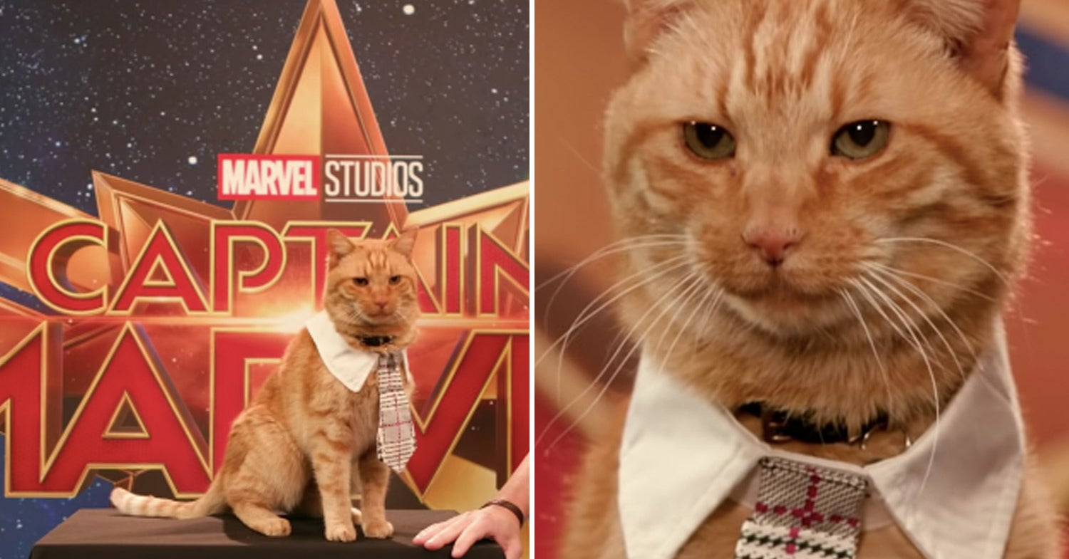 "goose the cat getting ready for the ""captain marvel"