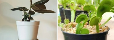 29 Beautiful Houseplants You Can Actually Order Online