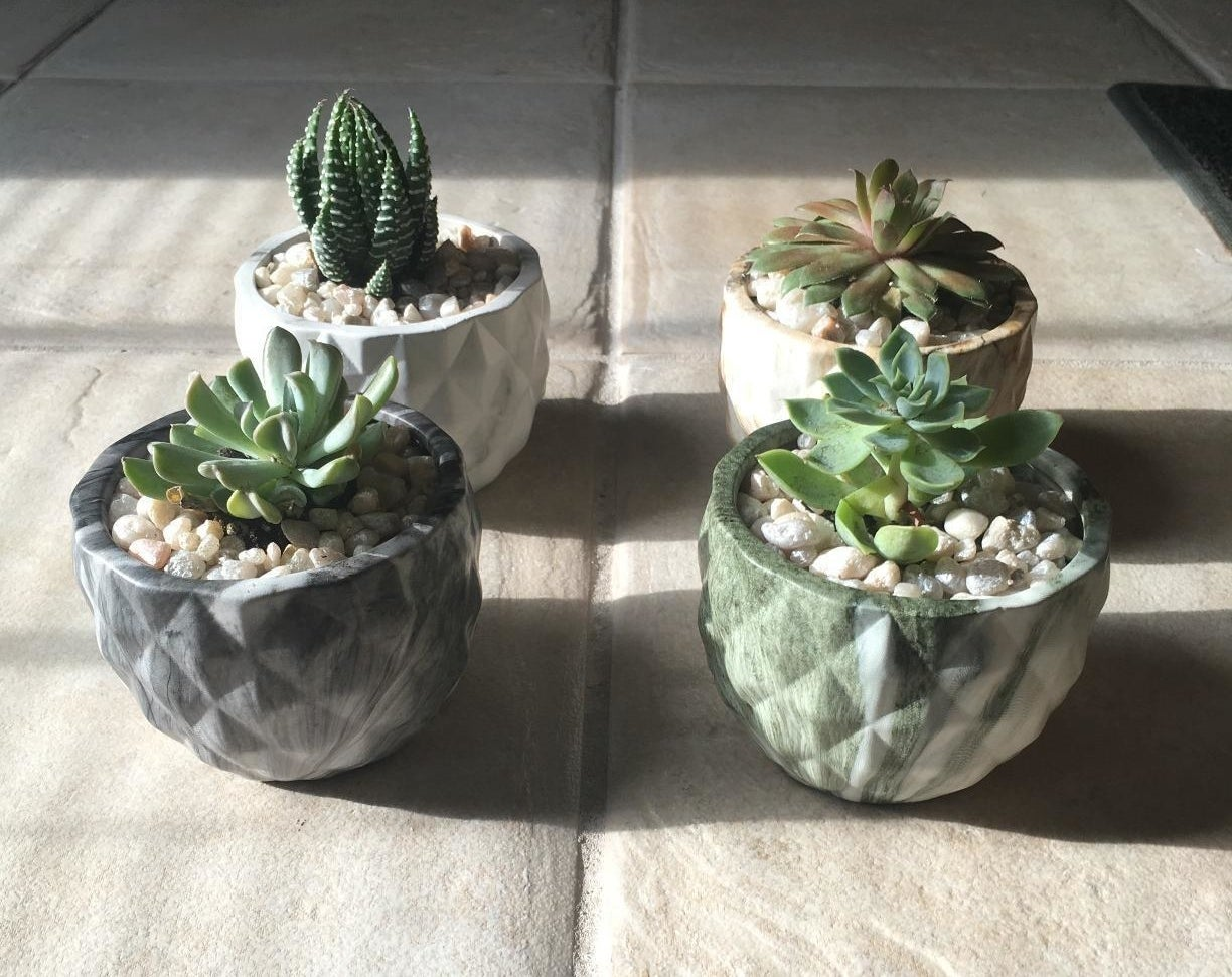 """This company donates a portion of their proceeds to animal shelters!Promising review: """"I decided to buy this set because I wanted to bring a little life into my workshop that didn't require too much attention. I was very shocked when I received them at how tiny they were, but during one of my trips to Lowes I was able to buy some succulent potting mix and some cheap pots and after transplanting these they grew SO fast. I am certain they will be ready for even larger pots soon. They were shipped securely and were extremely healthy as you can see from my photo. Since buying these my hobby has gone a little crazy and now I am buying cacti and other things but I highly recommend these for beginners. I even purchased a second set and potted them as a gift to a loved one to bring to the office."""" —LCFGet a set of five from Amazon for $15.95.Also, the planters aren't included, but you can get a set of four from Amazon for $17.99."""
