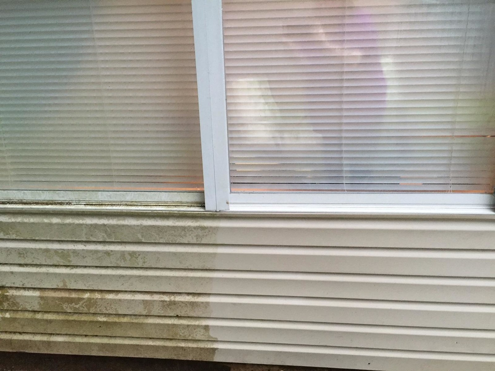 Side of reviewer's home; half the paneling is coated in greenish, greyish mildew and the other half is completely clean