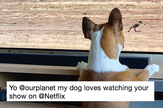 Pets Everywhere Are Loving