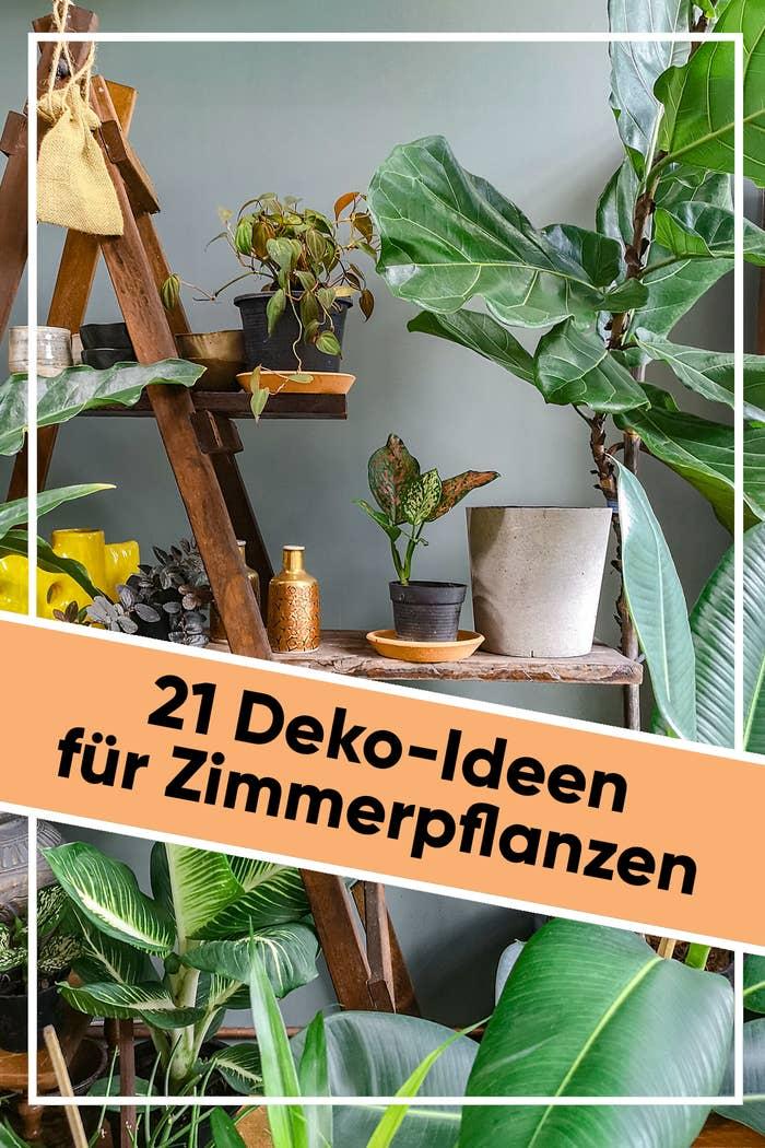 21 Deko-Ideen für Zimmerpflanzen, die deine Wohnung 200 ...