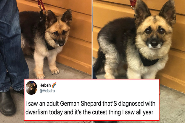 14 Dog Posts From This Week That ...