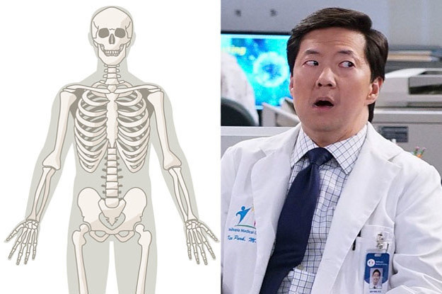 There Are Over 206 Bones In The Human Skeleton, And I'll Be Impressed If You Can Find 12