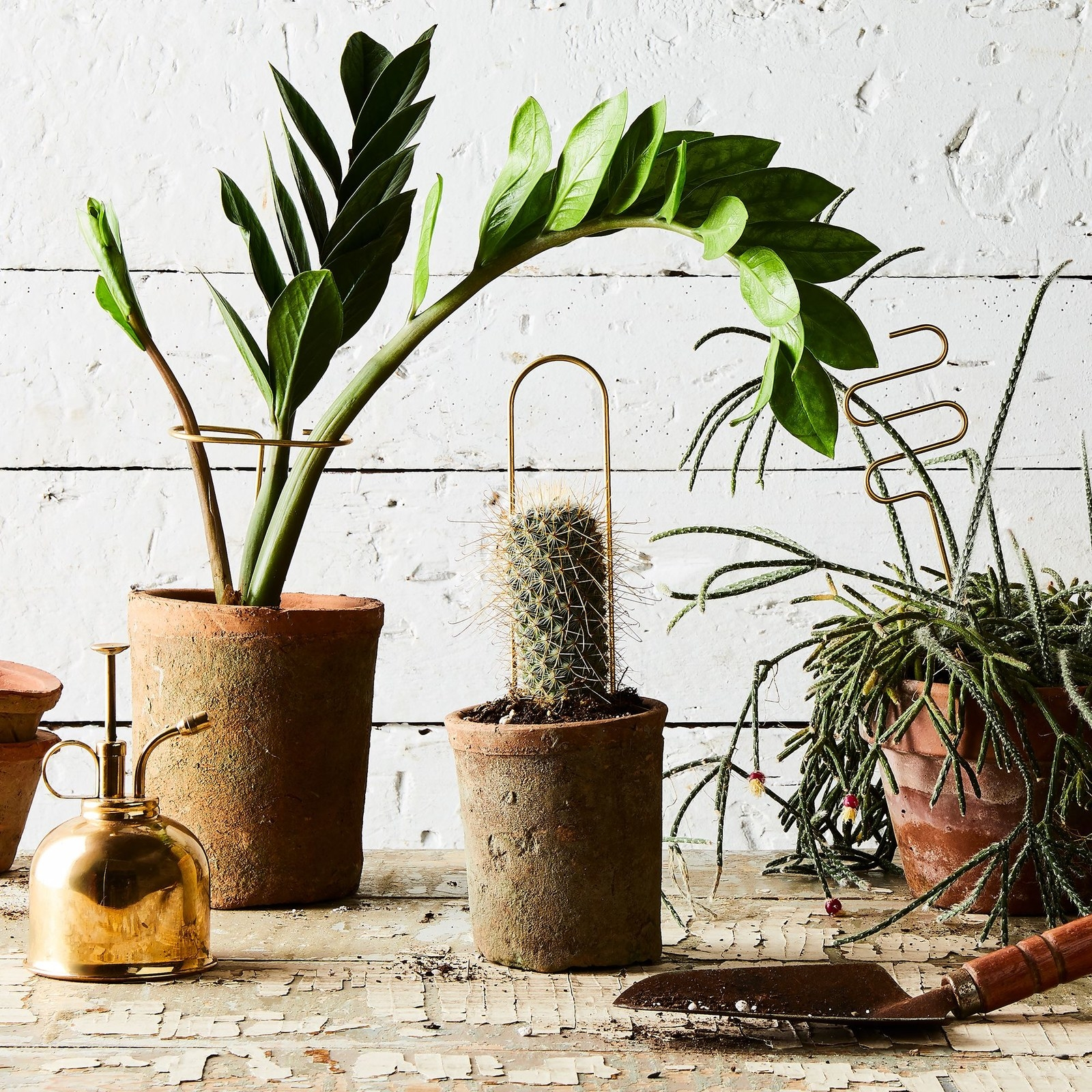 Geometric brass plant sticks in pots