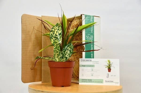 21 Subscriptions That Make Perfect Mother's Day Gifts on modern plant box, house tissue box, winter plant box,