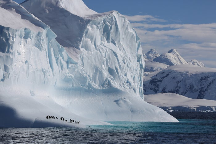 Gentoo penguins taking a rest from fishing on an iceberg passing by in the Gerlache Strait, Antarctic Peninsula.