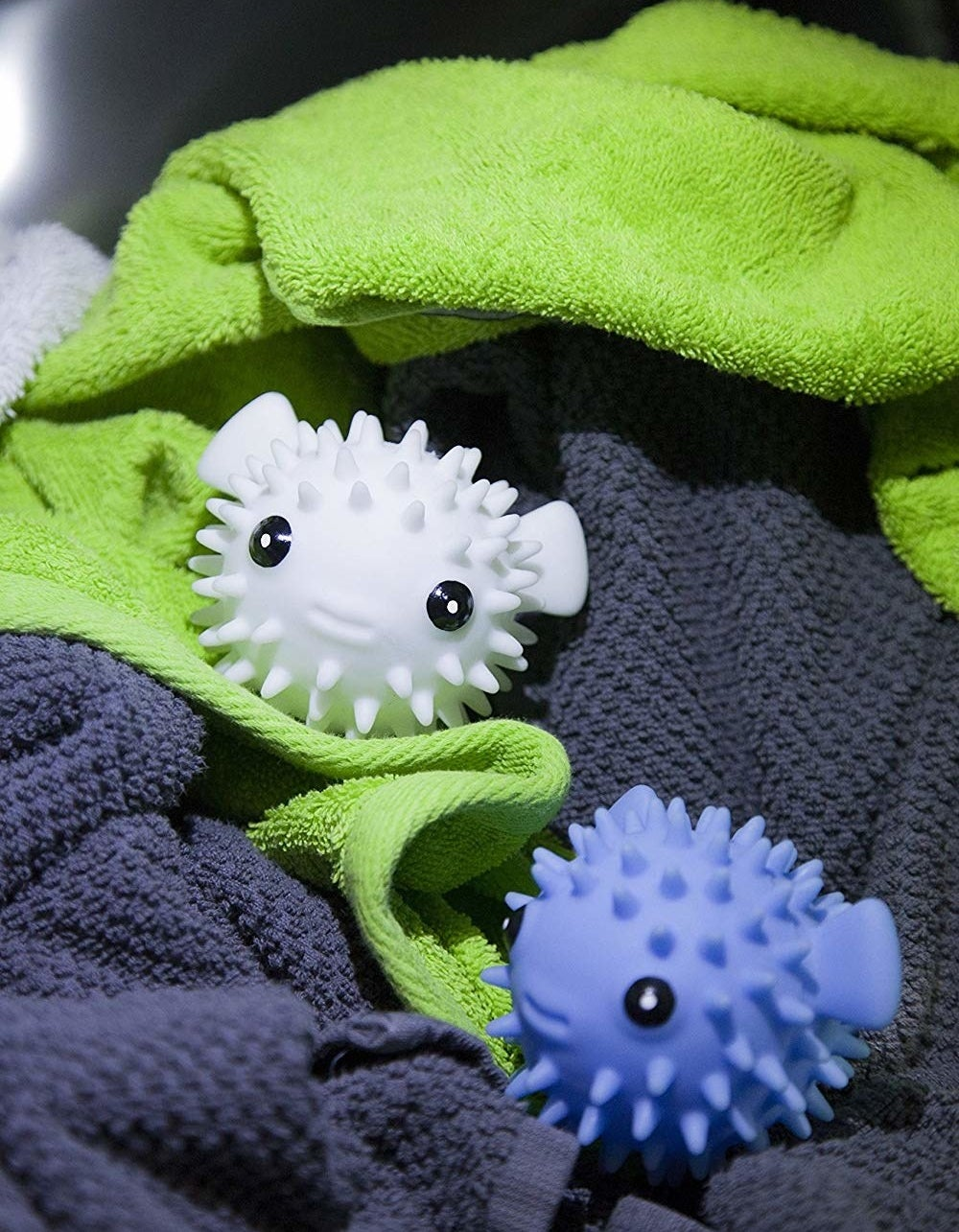 One white and one blue pufferfish nestled in towels