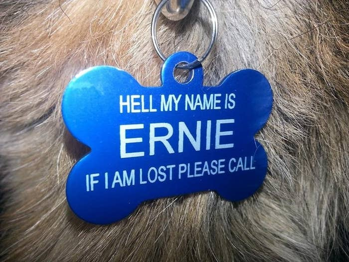 19 Pet ID Tags That Are Hilarious Yet Valid Forms Of