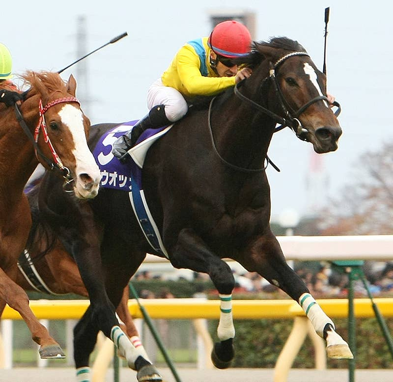 最強?牝馬ウォッカ死す。ダイワスカーレットとの勝負は騎手の腕で完敗の四位騎手