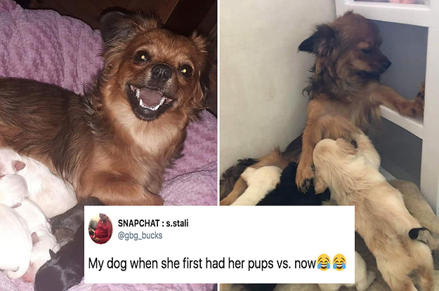 109 Dog Tweets To Mindlessly Scroll Through While You're Bored At Work