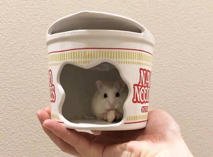 hamster sits in ceramic ramen noodles with hole in side
