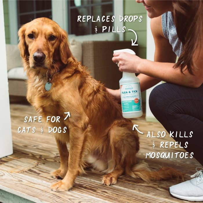 person spraying the product on a calm looking golden retriever dog