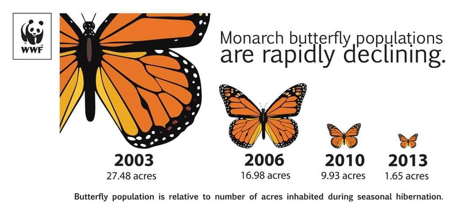 If You Miss Seeing Butterflies In Your Yard, There's Something You Can Do About It