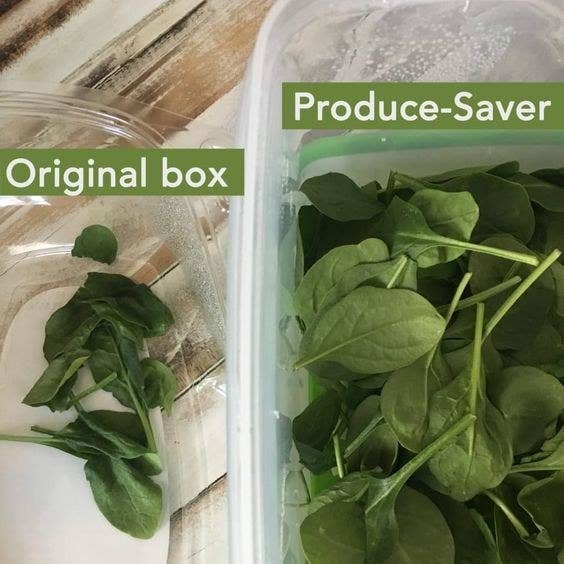 original box of spinach has wilted leaves in it, whereas the produce saver has fresh, crisp spinach leaves in it
