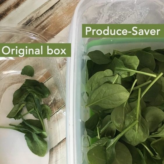 photo showing wilted spinach in its original container on left, and spinach still fresh in produce-saver container on the the right