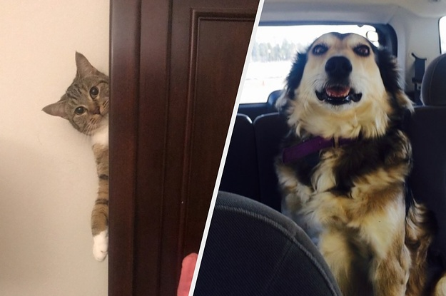Try Not To Giggle While Looking At These Silly Pet Pictures