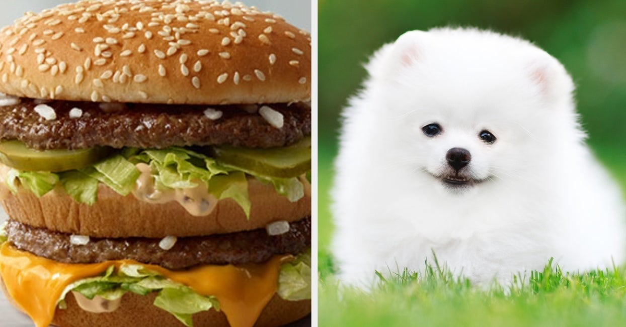This Fast Food Quiz Will Determine What Dog Breed You Are