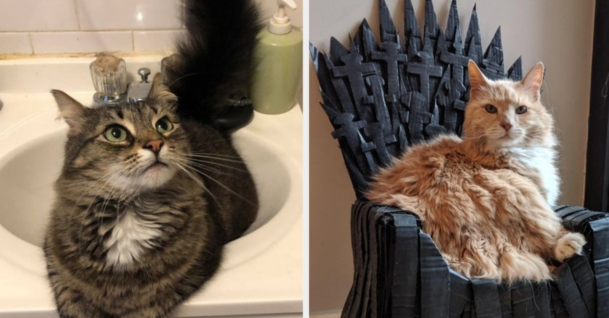 Here Are 17 Cat Posts From This Week That Will Make Your Day A Million Times Better