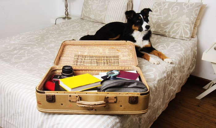 Suitcase is being packed on a bed with sad dog watching