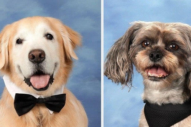 After Being There For Parkland Students, These Therapy Dogs Got Their Own Yearbook Page