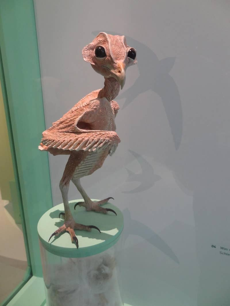 Basically a little raptor.
